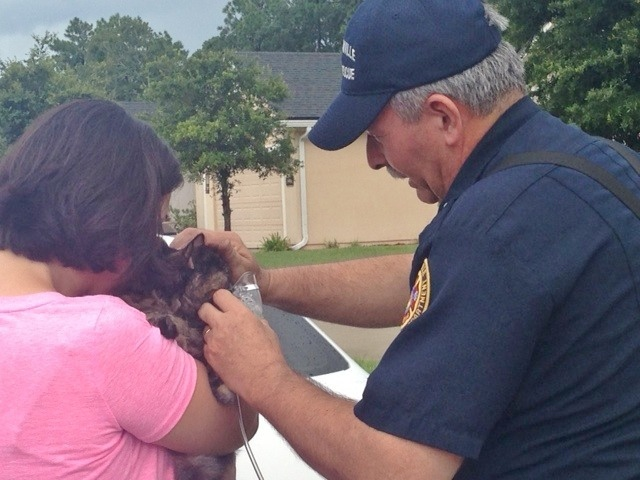 Cat is Rescued from a Freak Lightning Sparked House Fire