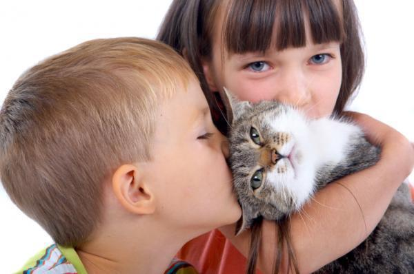 Lessons that Cats Can Teach Your Kids