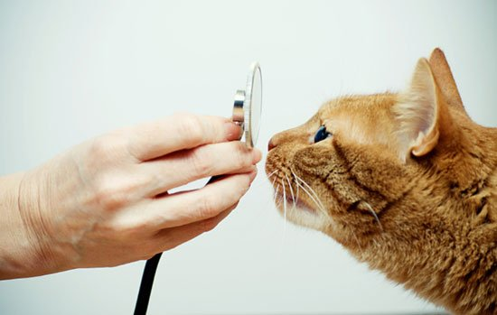 The Top Ten $1000 Cat Health Insurance Claims