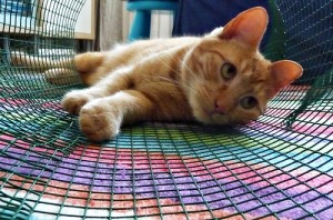 Can a Pain Management Center Help Your Cat?