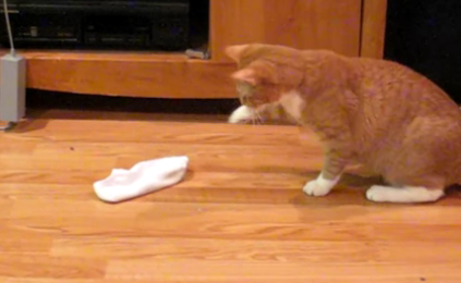 Cat Video of the Day:  Curious Cat is Scared of Socks