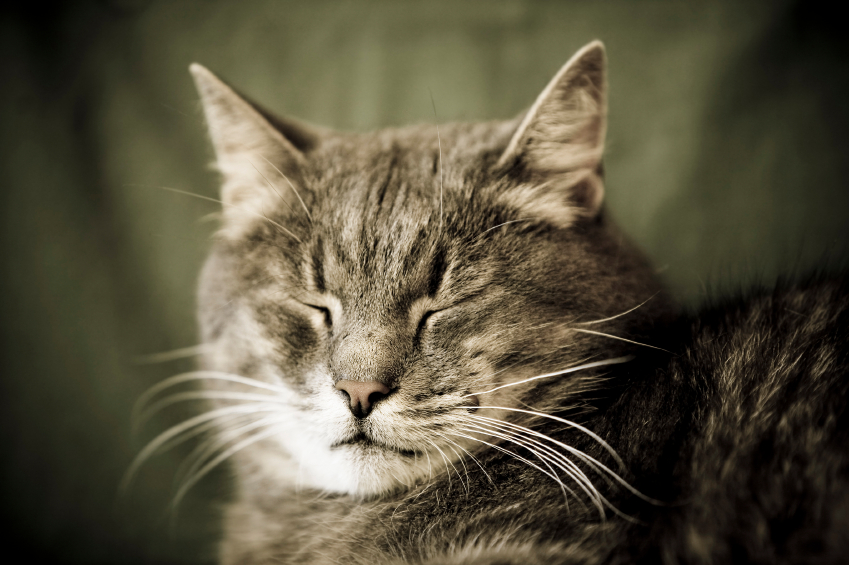 How to Take Care of Aging Cats