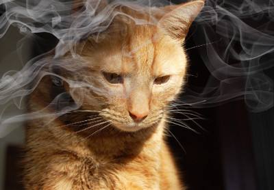 What Does Second Hand Smoke do to your Cat?