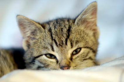 The Cat Urinary Health Problem Preventive