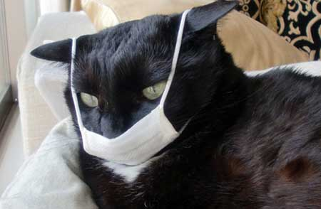 Truths and Myths about Cat Flu