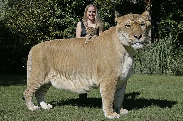 Guinness Names World's Largest Cat