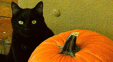 Keep Your Cat Healthy This Halloween