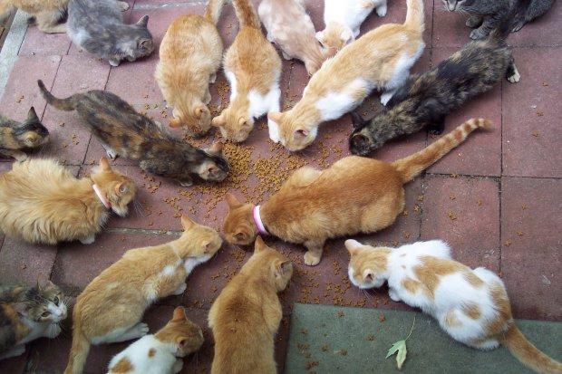 Humane Society Hosts Community Seminar To Address Stray Cat Issue
