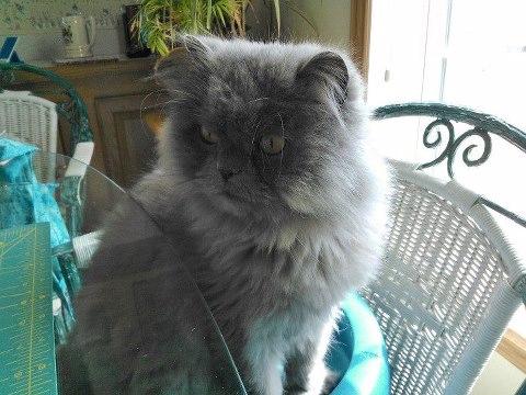 An Adorable Persian Cat Named Philip