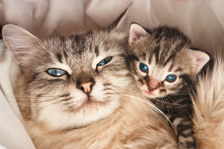 The Easiest Way to Assess Your Cat's Health