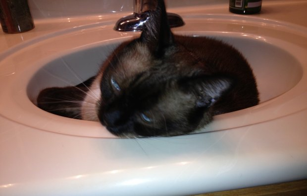 Snickers is Rescued and Now Likes to Rest in the Sink