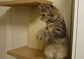 This Cat Loves to Wave at the Camera