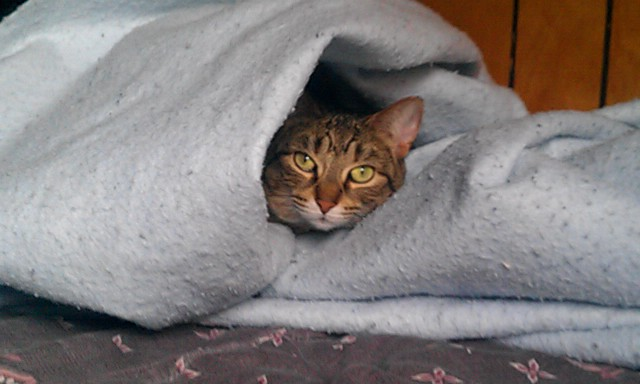 Just Another Kitty Trying to Keep Warm