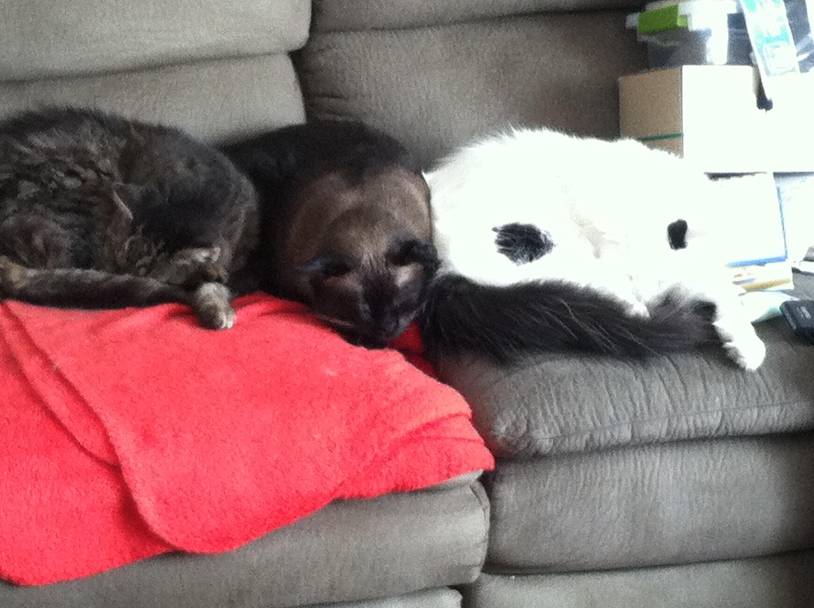 Three Cute Boys All Snuggle Together