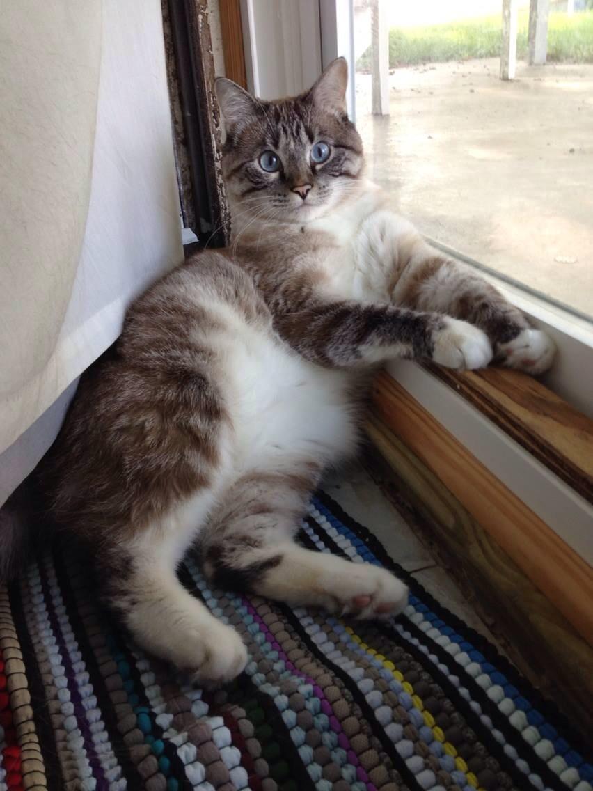 """""""Sophie Grace"""" The watch cat!"""