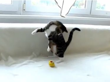 This Cat Knows How to Jump