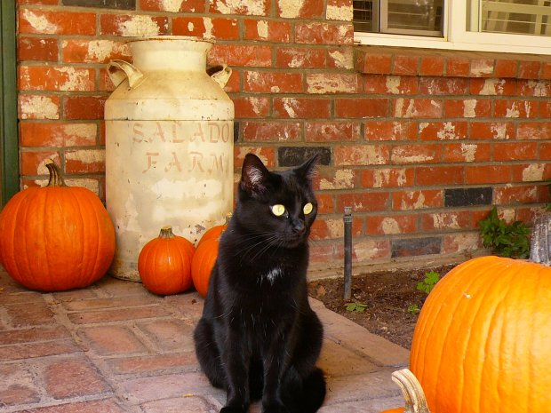 Sweet Olive and Her Pumpkins