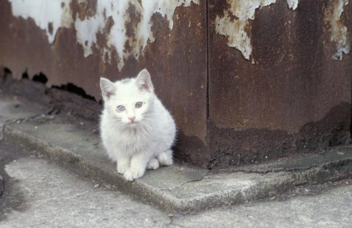 What do you Do when you Find a Stray Cat?
