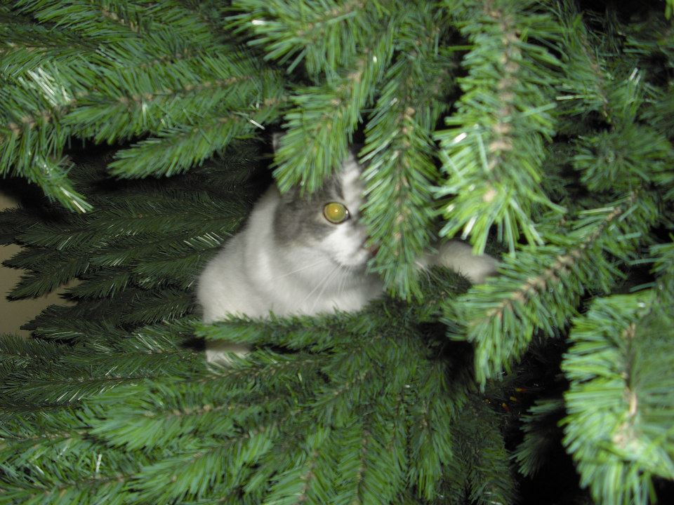 Thumper the Tree stalker