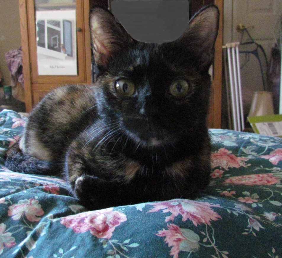 Fionnuala The Beautiful Tortie Cat