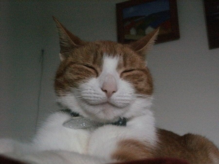 cat boy name