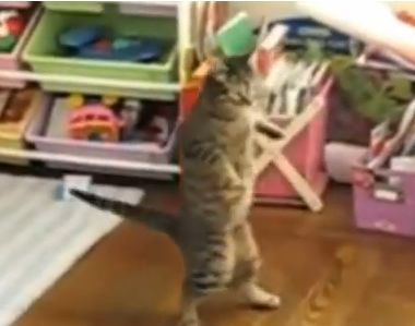 Compilation of Cats Acting Like Humans