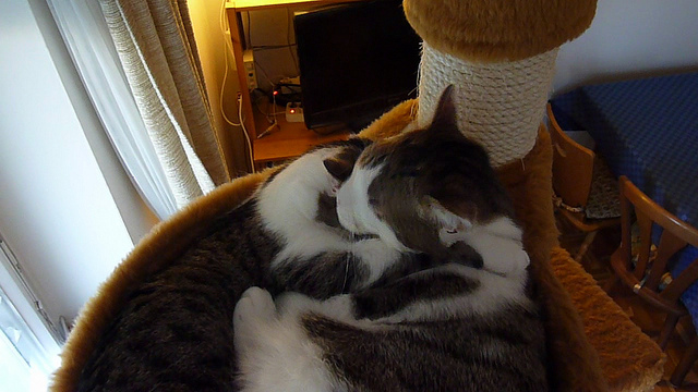 A Few Words on Cat Love and Friendship