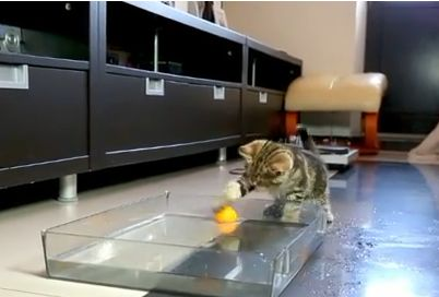 Kittens Playing Water Polo