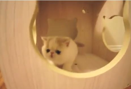 Kitten Barks Like a Puppy and it's Way too Cute