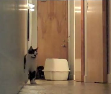 Check out this Cat's Somersault Skills