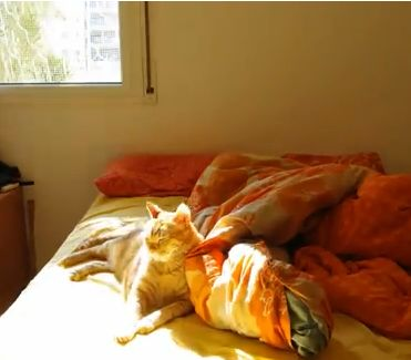 Time Lapse of the Luxurious Life of a Cat