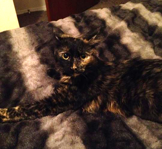 """Rescue Kitty Gingerpaw Wagner says """"Who, Me?"""""""