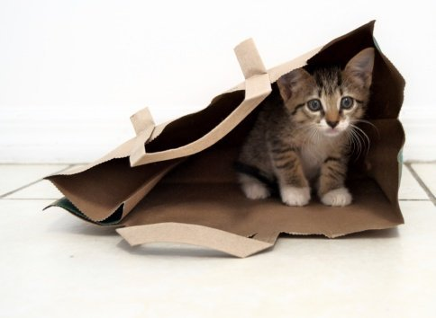 The Reasons Why Cats Love Boxes and Bags
