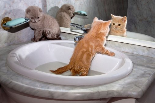 Best Practices when Bathing Your Cat