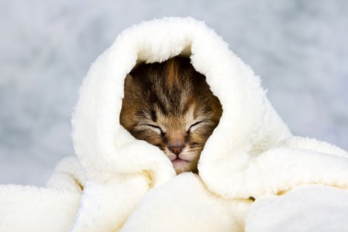 Great Tips For Calming Your Cat