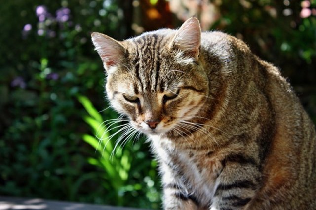 Antioxidants Are Essential to a Cat's Diet