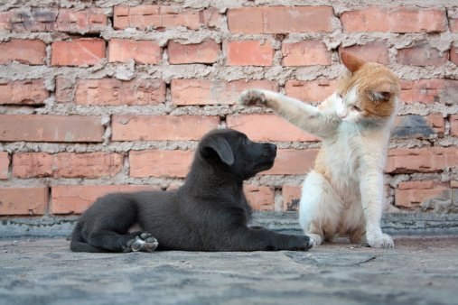 """How to Teach Your Cats the """"Come"""" Command"""