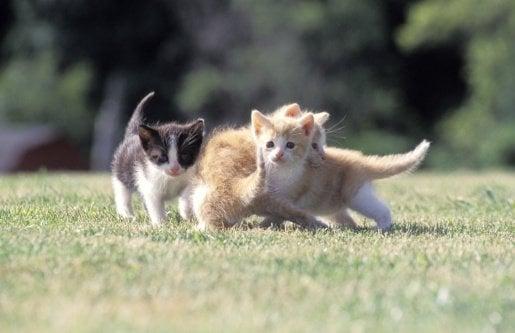 An Explanation of Kitten Kindergarten