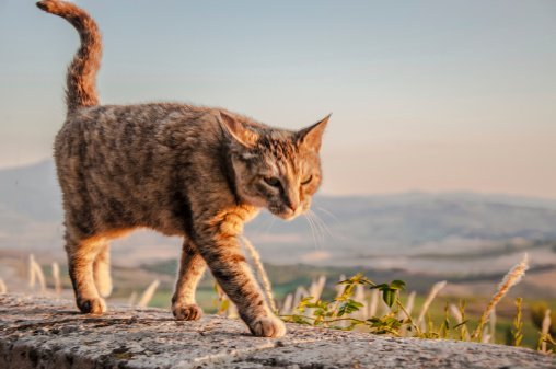 Basic Tips When it Comes to Walking Your Cat