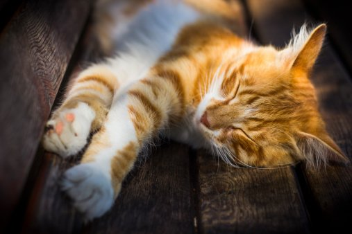 Can Cats Predict the Death of Humans?
