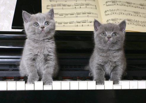 how to play year of the cat on piano