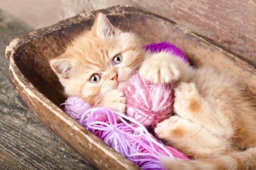 Pet Tricks that Will Smarten Up your Cat