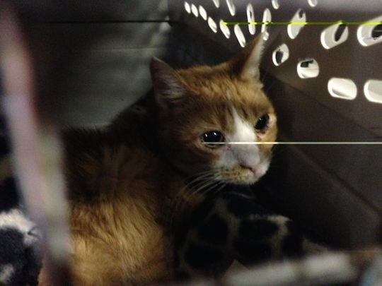 Dozens of Cats Rescued After Their Owner is Found Dead