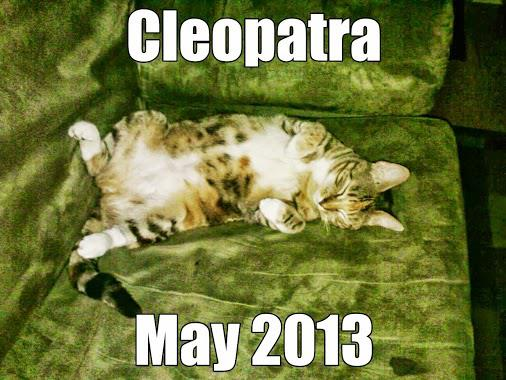 Cleopatra Was Saved from Near Death from Being Trapped Under a Trailer