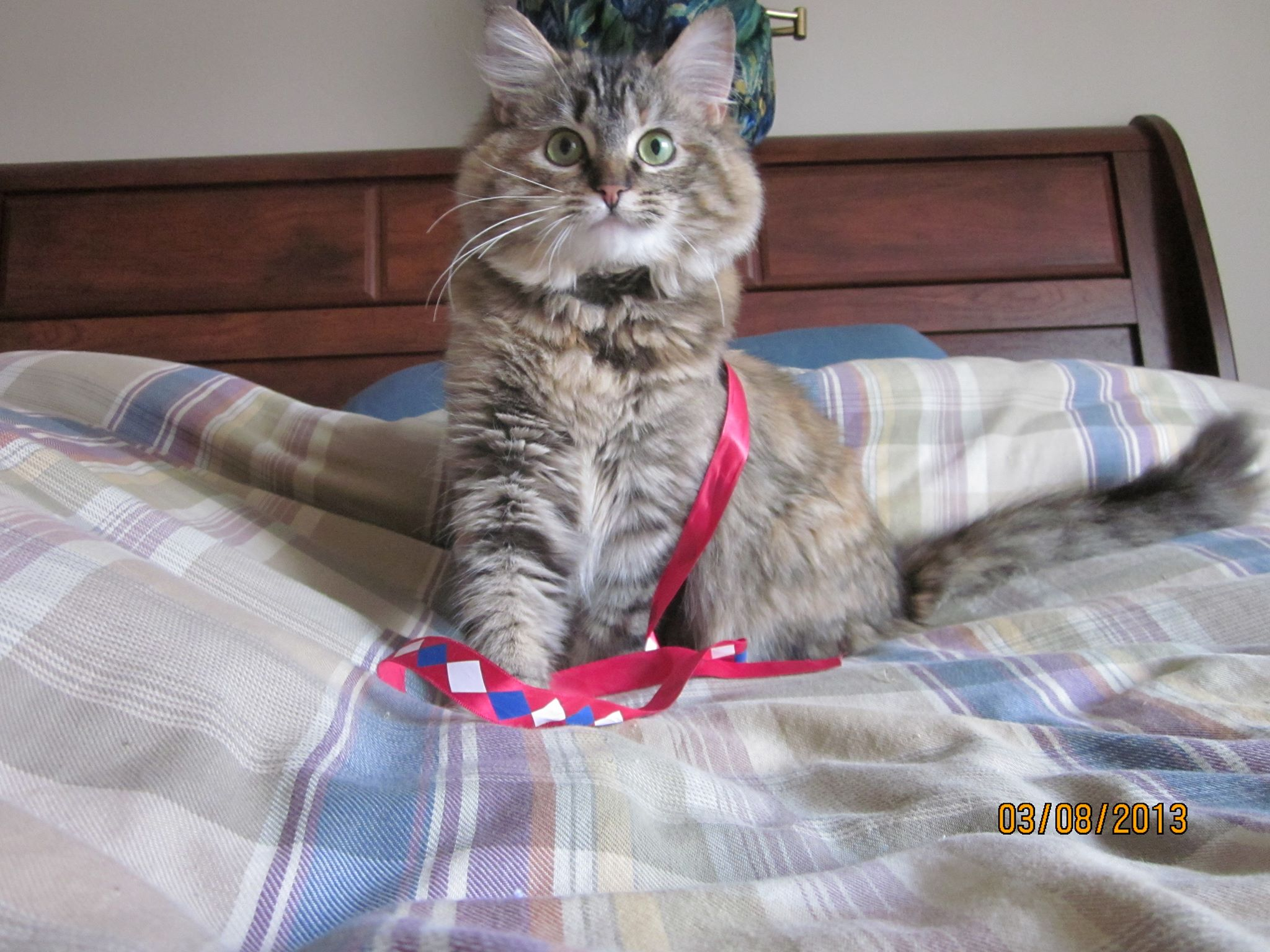 Rescue Cat The Divine Diva Princess Chloe