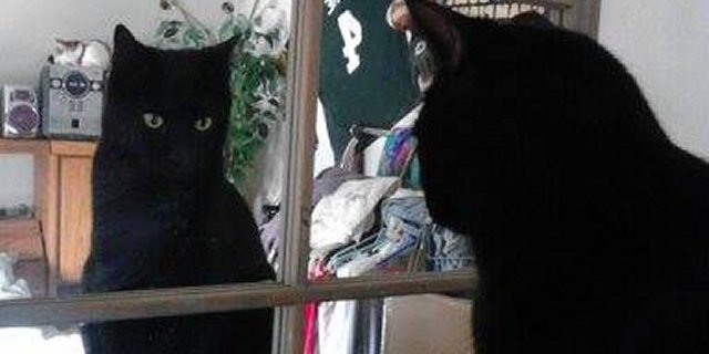 Dude The Black Cat has a Funny First Person Story