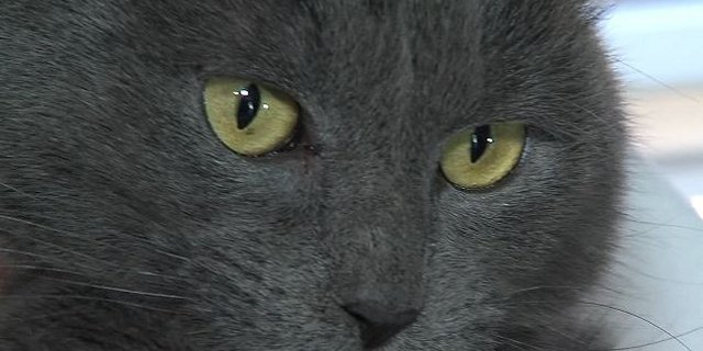 Lost Cat Reunites With Family After Missing from Cabin