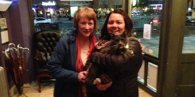 Oreo the Cat Was Stolen on St. Patrick's Day, Guess Where She Was Found….