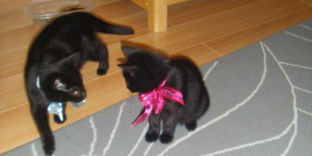 Kittens Are Cared for and Placed in New Homes