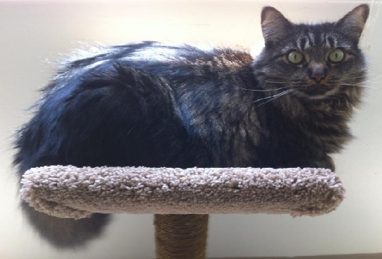 Ollie The Brown Tabby Healed Her Owner's Heart
